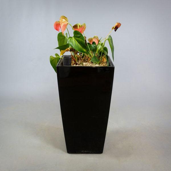 Lechuza-kruka med planta