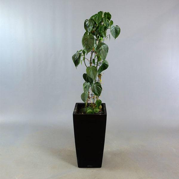 Växt i kruka från Lechuza