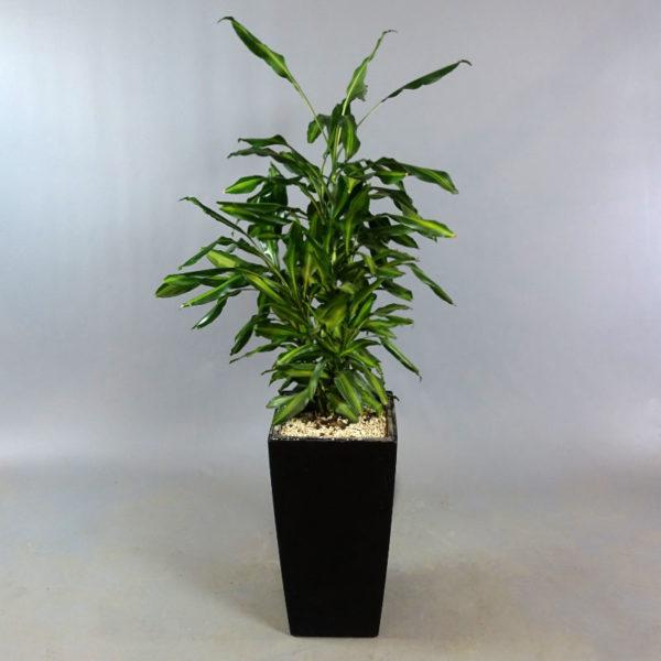 Växt i Lechuza-kruka