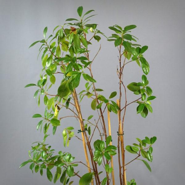 Planta i kruka från Lechuza